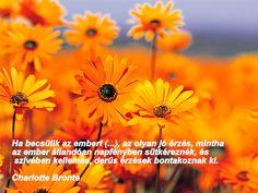 kedvenc idézeteim Go Around, Dandelion, My Love, Flowers, Plants, Quotes, Life, Quotations, Dandelions