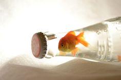 Fishyyyyy!