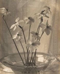 flowers, by Laura Gilpin (platinum print)