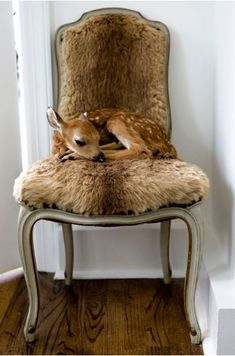Faux fur a chair??? Creative! Then you just go get a fawn and voila! Completed look! :D