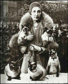 Old picture siamese cats