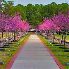 Warriors Walk, Fort Stewart, GA. Got to see these trees when they were twigs and first planted. They started this idea and planted a tree for every so many soldiers that were killed in the line of duty from Fort Stewart Base.