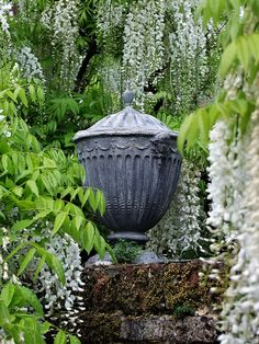Urn & Wisteria--these lead urns are good reproductions of period classical examples & are available for purchase.