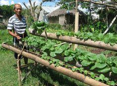 Urban Farmer Pechay By Golly Wow