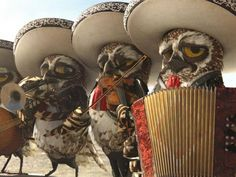 Rango Owls... :) Best characters in the movie...Except for the Fear and Loathing/ Clint Eastwood cameos ;)