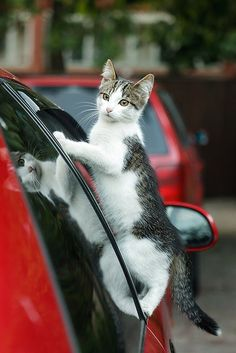 """""""Can I ride with you? Cat by ©Andrey on Flickr"""