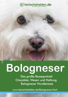 Rasseporträt - Charakter, Haltung & Pflege Dogs, Animals, Companion Dog, Parenting, Nursing Care, Cats, Animaux, Doggies, Animal