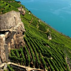 Mountainside vineyard