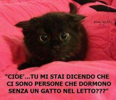 I Love Cats, Crazy Cats, Cute Cats, Funny Cats, Animals And Pets, Funny Animals, Cute Animals, Sushi Cat, Italian Memes