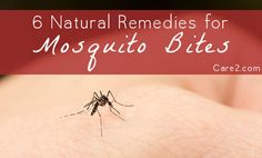 Natural Remedies for Mosquito Bites that Really Work | Care2 Healthy Living