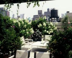a rooftop oasis!