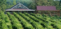 Woodmill Winery, Vale NC Beautiful in the late summer while stomping grapes or at Christmas. Good Wine too.