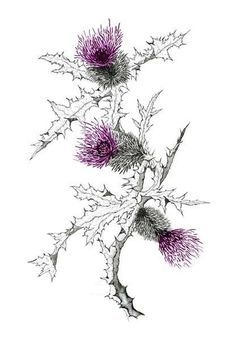 scottish thistle and peony tattoo - Google Search
