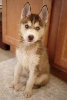 <3 looks like lassie