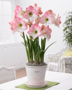"Learn ""All About Amaryllis"" flower bulbs that you need to know."