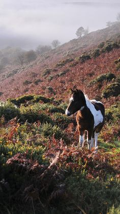 Dartmoor foal. Our tips for 25 fun things to do in England: http://www.europealacarte.co.uk/blog/2011/08/18/what-to-do-england/