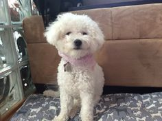 Rosa is being such a diva! Diva, Animals, Animaux, Animal, Animales, Godly Woman, Animais