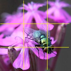 Another rule of thirds photography tip