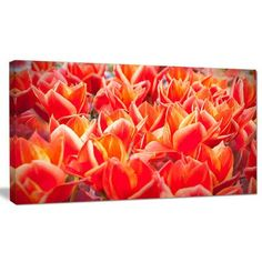 "DesignArt 'Tulip Flowers in the Keukenhof Park' Photographic Print on Wrapped Canvas Size: 28"" H x 60"" W x 1.5"" D"
