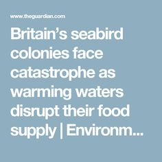 Britain's seabird colonies face catastrophe as warming waters disrupt their food supply | Environment | The Guardian