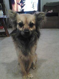 One cute doggie