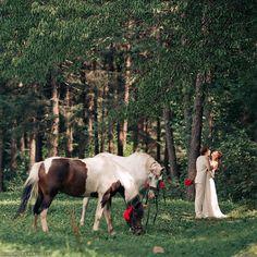 horses on wedding