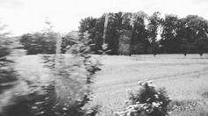 The Past Passing By (Wellendorf 2016) #wellendorf #hilter #osnabrück #forest #dorf #village #home #heimat #landscape #landschaft #pittoresk #trees #hallerwillem #imzug #zugfenster #memories #erinnerungen #schwarzweiss #blackandwhite #osnabrueck #blurred #verschwommen #outoffocus