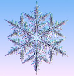 Branching - Morphogenesis on Ice - The transformation that turns a faceted ice prism into an intricately branched stellar dendrite is an example of physical morphogenesis—the spontaneous creation of pattern and form by inanimate materials, the process by which order arises from chaos...