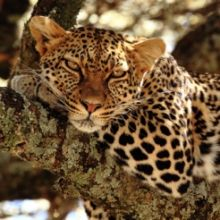 South Africa | African Wildlife Foundation