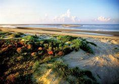 Kiawah Island, South Carolina, my very favorite beach. Places To Travel, Places To See, Kiawah Island Club, Carolina Beach, South Carolina, Seabrook Island, Ocean Park, Beach Town, Island Life
