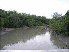 Rio Caeté - Bragança, Parà
