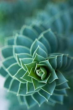 The math and geometry found in nature - Succulent Cacti And Succulents, Planting Succulents, Planting Flowers, Succulents Wallpaper, Succulent Seeds, Patterns In Nature, Textures Patterns, Nature Pattern, Foto Macro