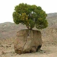 Ağaç - Regarding to a Woman and Man! Inspirational - A marriage has a solid foundation and there is always a Way to Find a solution to an Issue - A marriage can grow either Weeds or Flowers. I will call the tree a Flower!