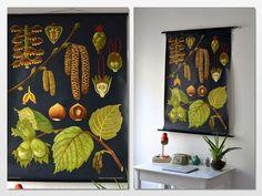 Vintage school pull down chart map botanical hazelnut flower plant West German biology print via Etsy $242