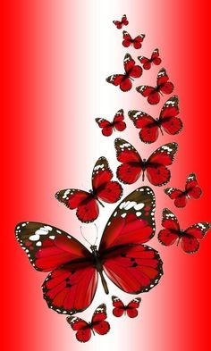 phone wall paper flowers * cjf - J - phonewallpaper Red Wallpaper, Butterfly Wallpaper, Galaxy Wallpaper, Wallpaper Backgrounds, Beautiful Flowers Wallpapers, Pretty Wallpapers, Beautiful Butterflies, Purple Butterfly, Butterfly Flowers