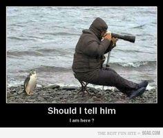 follow us! we have hundreds of hilarious pics! :)