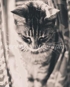 Black and White Cat 8x10 Print by BeresyPhotography, $30.00 #nurseryart #wallart #homedecor #animalphotography #naturephotography #blackandwhitephotography #blackandwhiteprint #catphoto #catprint #catart #etsy #nurserydecor #kidsroomdecor #childrensroomdecor #childsroomart #art