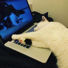 #niilo ja #kissavideot #funnycat #watching #catvideos