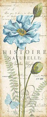 Poppies.Histoire.Naturelle.Panel.01.of.02