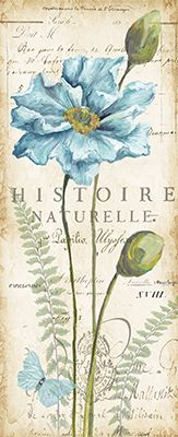 RB6832TS <br> Poppies Histoire Naturelle Panel I <br> 20x8