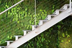 us for Artificial and Natural Preserved Plants in Dubai, UAE. Desireign with Preserved moss wall in uae are the UAE's premier manufactures of artificial and preserved plants & trees. Nature Plants, Real Plants, Moss Wall, Deco Floral, Interior Walls, Dream Garden, Trees To Plant, Preserves, Garden Design