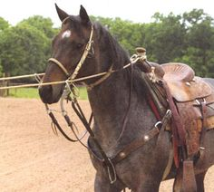 C.R. Bradley uses two ropes during training to help the horse understand backing. Journal photo.