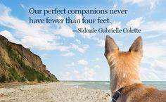 Inspirational Quotes for Animal Lovers