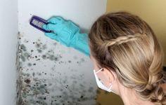 El moho en casa no solo daña las paredes, sino también es pel...