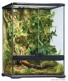 Terrarium Exo-Terra Naturel - 45 x 45 x 60 cm - Zone Aquatique
