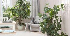 die 233 besten bilder von exotische zimmerpflanzen exotische zimmerpflanzen blumen und blumen. Black Bedroom Furniture Sets. Home Design Ideas