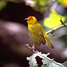 Waiting for Spring by Natalia Korolyuk on Etsy Waiting, Bird, Spring, Etsy, Animals, Animales, Animaux, Birds, Animal
