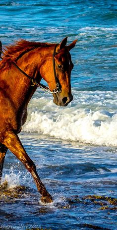 """Beautiful horse  """"Hmm...a little cold but probably ok once I'm in!"""""""