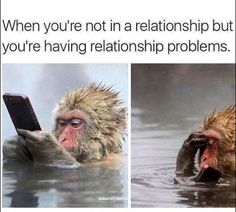 Whats a Good relationship without some humor, here are some funniest and hilarious relationship memes that will only make sense if you are engaged . Whats a Good relationship without some humor, here are some funniest Animal Memes, Funny Animals, Haha, Relationship Memes, Relationship Problems, Funny Memes About Relationships, Just For Laughs, Laugh Out Loud, The Funny