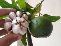 YouTube Plant Diseases, Garden Pests, Green Grass, Shrubs, House Plants, Gardening Tips, Avocado, Flora, Fruit
